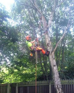 Tree Pruning in Manchester