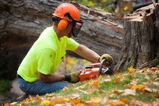 Stump Grinding Wigan & Manchester